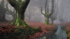 14 ป่าพิศวง ที่เห็นแล้วอยากหลงเข้าไปอยู่ในนั้น