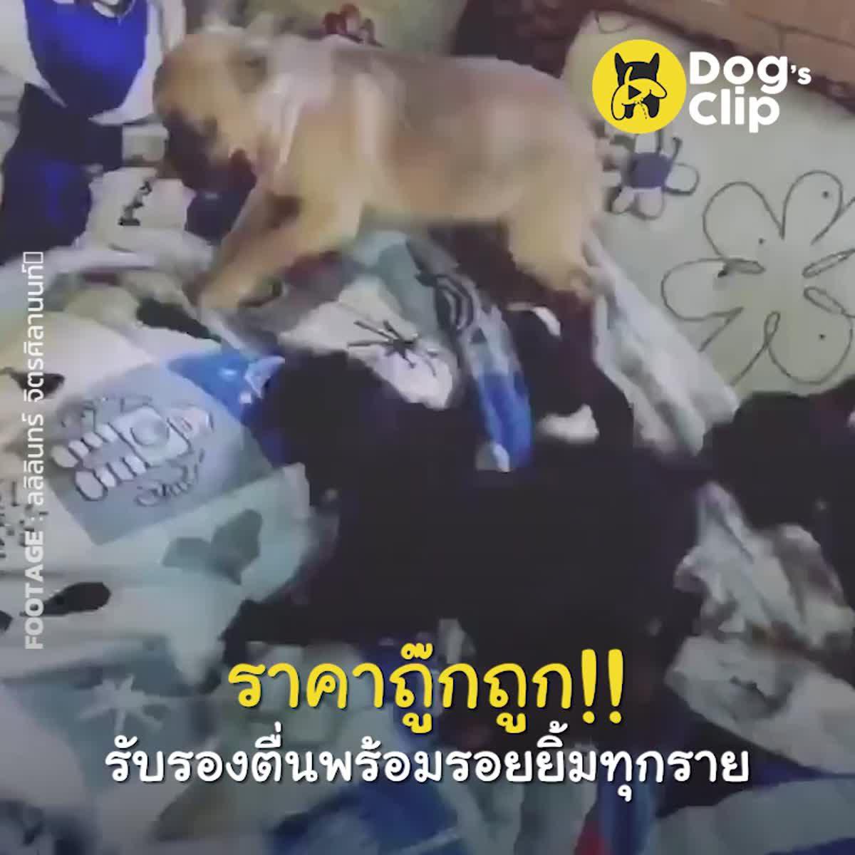 นาฬิกาสำหรับคนรักน้องหมาขี้เซาไม่ควรพลาด ราคาถู๊กถูก!! รับรองตื่นพร้อมรอยยิ้มทุกราย