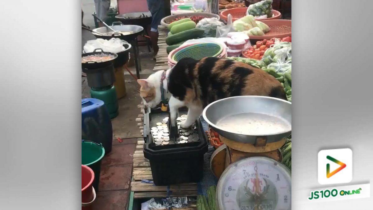แมวทำหน้าที่เฝ้าทรัพย์สินน่ารักจัง (12-5-61)