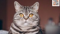 ทาสแมวฟังทางนี้ ผลวิจัยเผยสีหน้าแมว บอกความรู้สึกได้