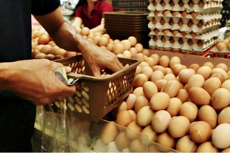 เกษตรกรไก่ไข่ ยันไข่เพียงพอกับการบริโภค  ชี้ร้อนแล้งกระทบผลผลิต เกษตรกรมีต้นทุนค่าน้ำ-ไฟร่วม 10 สตางค์ต่อฟอง