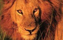 20 Animals That Will Kill You สายพันธุ์อันตราย
