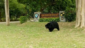 Meet Charlie Chak-Kui and Friends @Kui Buri National Park