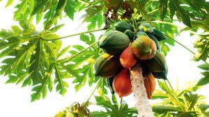 10 สรรพคุณของใบมะละกอ ของดีใกล้ตัว สารพัดประโยชน์ ที่รู้แล้วต้องบอกต่อ!!!