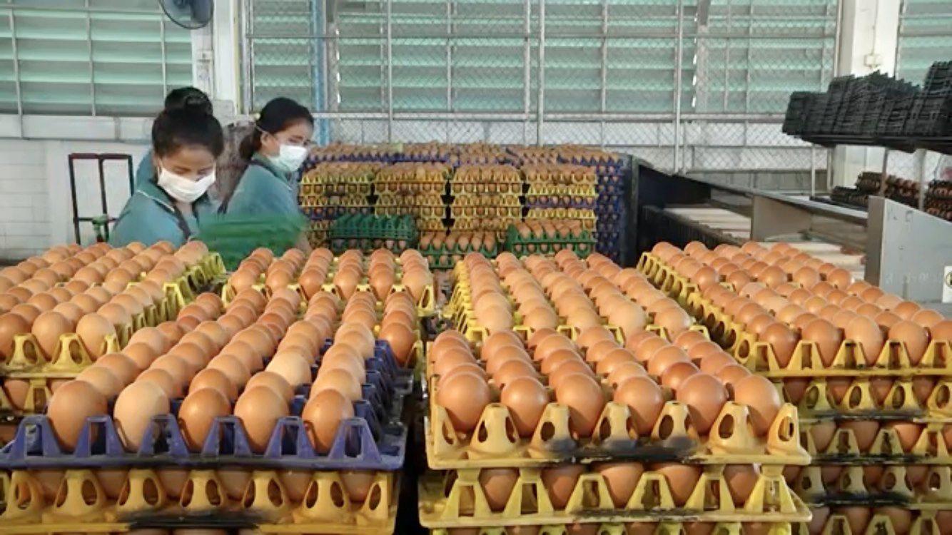เกษตรกรผู้เลี้ยงไก่ไข่ ขอรัฐเร่งปลดล็อคส่งออกไข่ ก่อนเจ๊ง หลังไข่ล้นตลาด เหตุผู้บริโภคคลายกังวลโควิด
