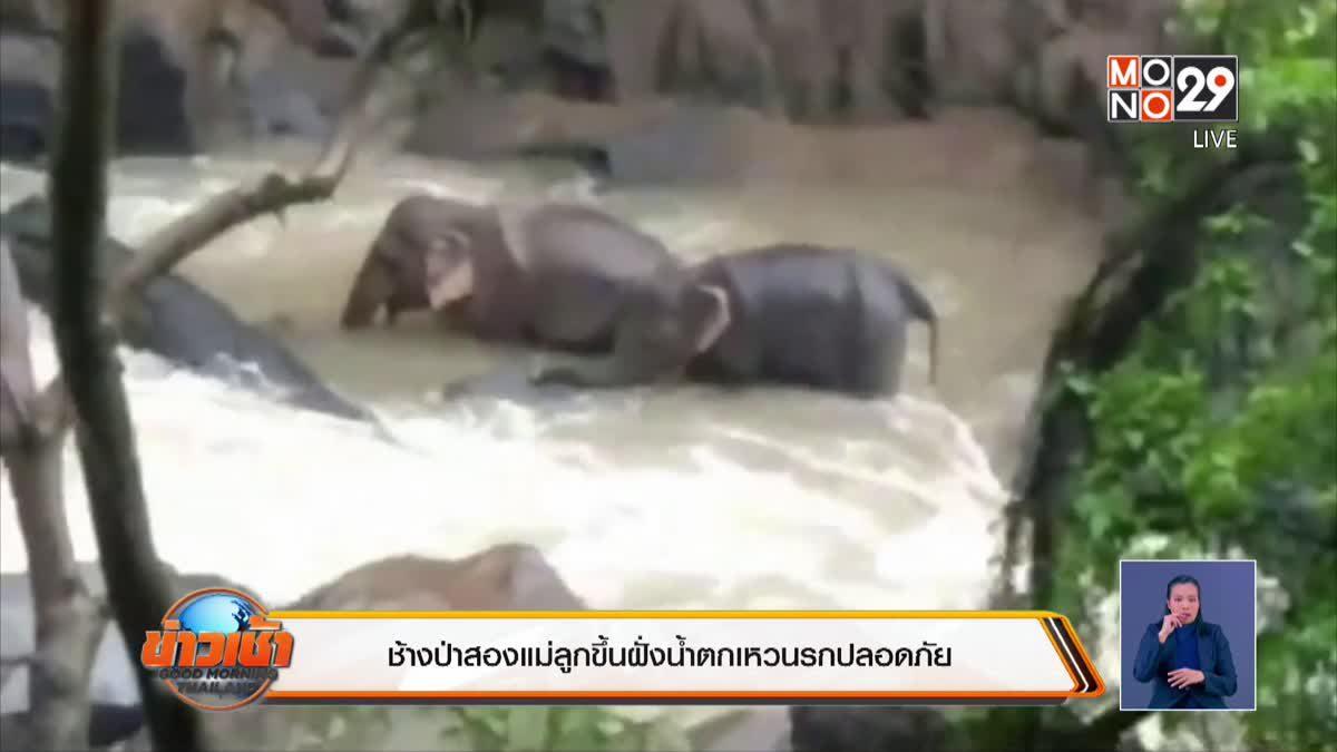 ช้างป่าสองแม่ลูกขึ้นฝั่งน้ำตกเหวนรกปลอดภัย