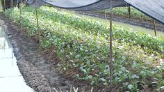 ชาวจันทบุรียึดหลักเศรษฐกิจพอเพียงของ ร.9 ทำเกษตรผสมผสาน สร้างความเป็นอยู่ที่ดีขึ้น