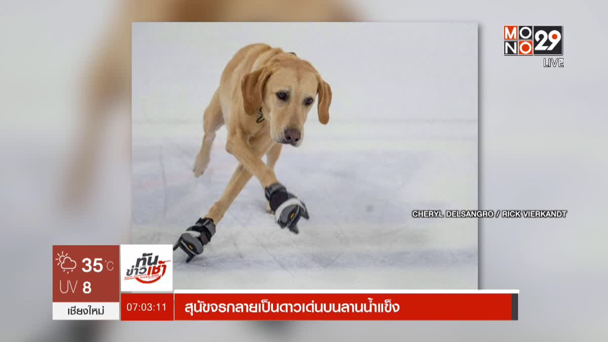 สุนัขจรกลายเป็นดาวเด่นบนลานน้ำแข็ง