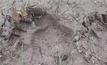 ชาวบ้านจ.นครนายกวิตกพบรอยเท้าหมี