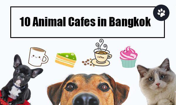 10 Animal Cafes in Bangkok