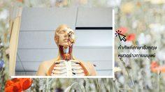162 คำศัพท์ภาษาอังกฤษ หมวดร่างกายมนุษย์ - Body