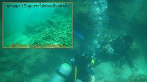 หยุดทำร้ายทะเล! อ.ธรณ์เรียกร้อง ยกเลิกกิจกรรม try dive