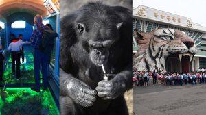 ภาพที่ไม่เคยเห็นมาก่อนของ สวนสัตว์ ในประเทศเกาหลีเหนือ
