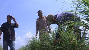 ชาวนาลพบุรี หันปลูก 'ตะไคร้' ส่งขายโรงงาน ทำรายได้สูงกว่าเท่าตัว
