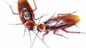 เอือมเต็มทีกับพี่ปีเตอร์! ลอง วิธีไล่แมลงสาบ ออกจากบ้านแบบง่ายๆ