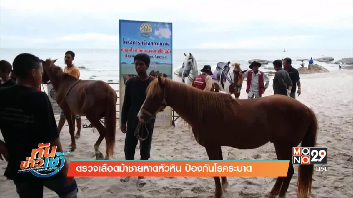 ตรวจเลือดม้าชายหาดหัวหิน ป้องกันโรคระบาด