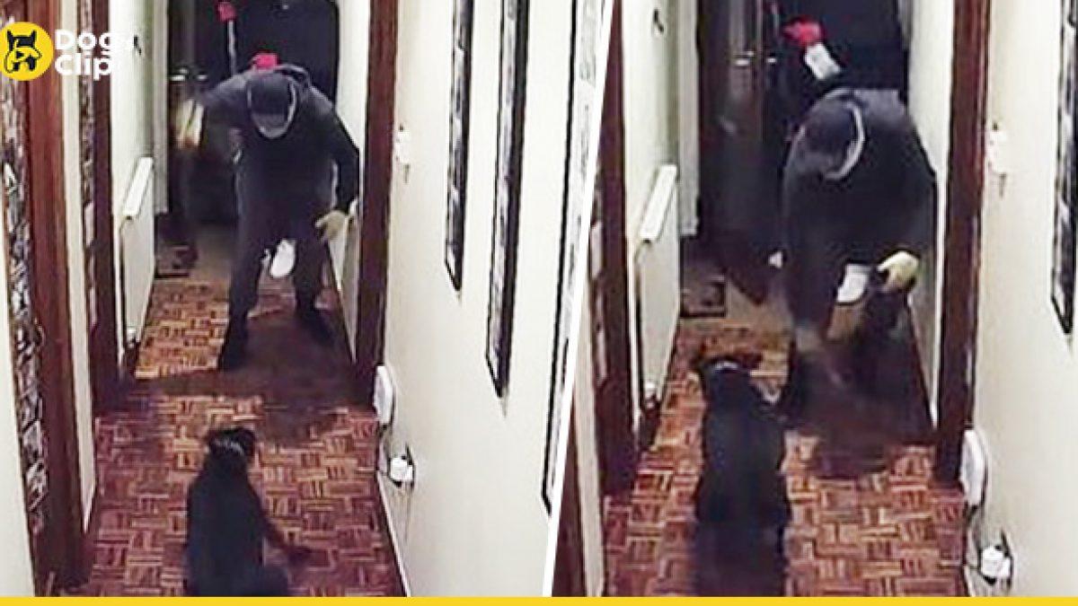 โจร 4 คนบุกปล้นอุกอาจ พยายามผลักประตูเผชิญหน้าเจ้าของบ้าน โชคดีน้องหมาจู่โจมไล่ป้องไว้ทัน นายรอดหวุดหวิด