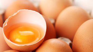 เก็บไข่ได้นาน 1 ปี โดยไม่ต้องง้อตู้เย็น แค่ใช้….