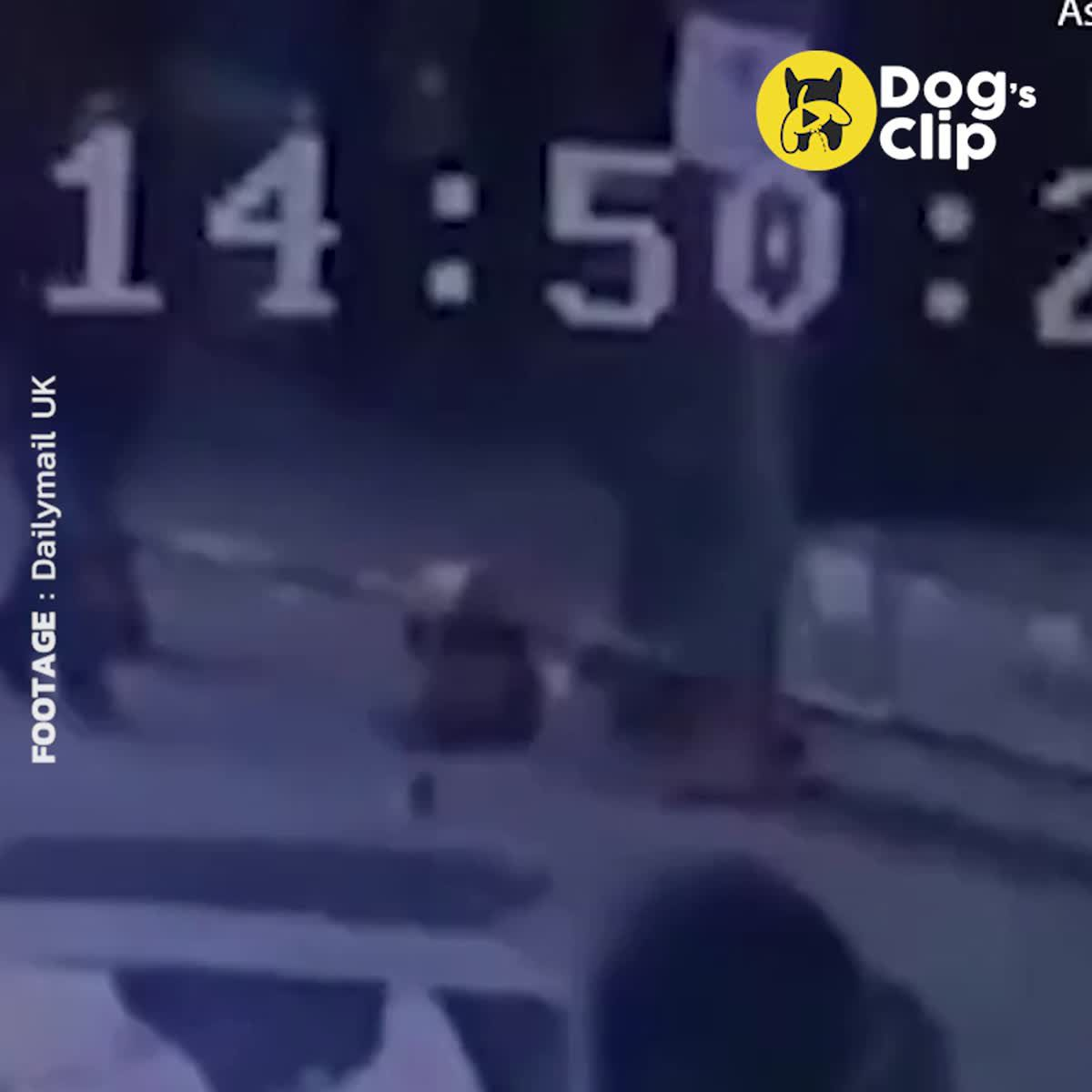 เหตุการณ์ก่อนที่ โกลเด้นจะโดนตำรวจตีเลือดสาดดับอนาถข้างถนน