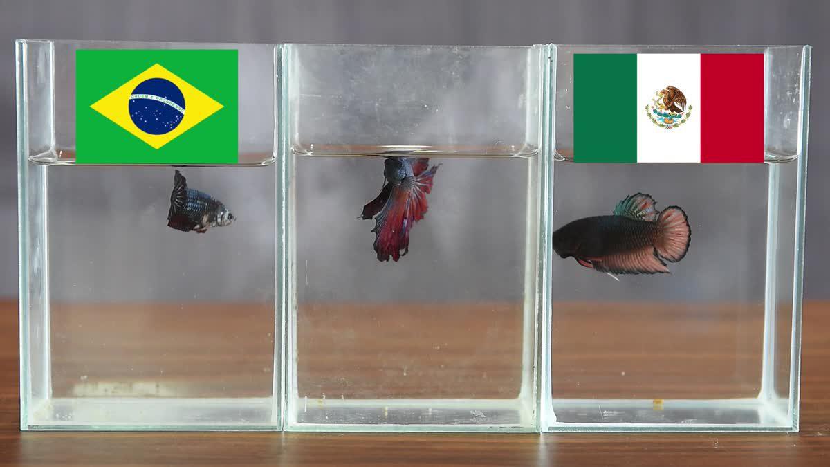 ซี้ซั้วเอามาเล่า ฟันธงบอลโลก 2018 รอบ 16 ทีม วันที่สาม