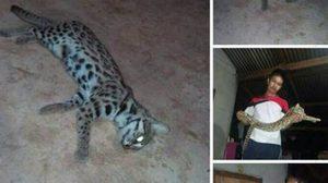 โดนเข้าแล้ว! หนุ่ม ฆ่าแมวลายหินอ่อน โพสต์โชว์เฟซบุ๊ค สุดท้ายไม่รอด