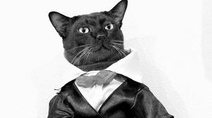 ชาวเน็ตแห่อาลัย  จอนนี่ อาตแมว แมวไอดอล หลังมันหมดลมตายลงแล้ว