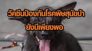 กรมควบคุมโรคยัน! วัคซีนป้องกันโรคพิษสุนัขบ้า ขณะนี้ยังมีเพียงพอ