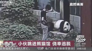ชายชาวจีน ปีนเข้าไปเล่นกับแพนด้ายักษ์