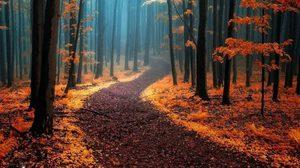 13 ป่าลึกลับสวยงามจากทั่วโลก เหมือนในเทพนิยาย