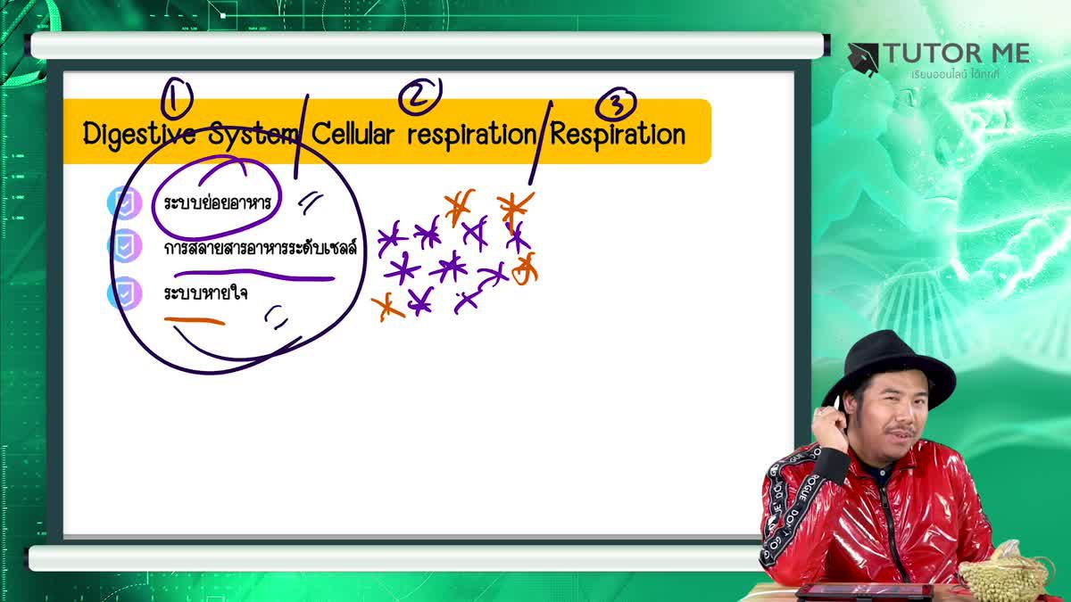 EP 7 Digestive System Cellular respiration Respiration 1