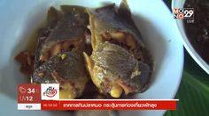 ชาวพัทลุง ร่วมงานเทศกาลกินปลาหมอ กระตุ้นการท่องเที่ยวเชิงเกษตร