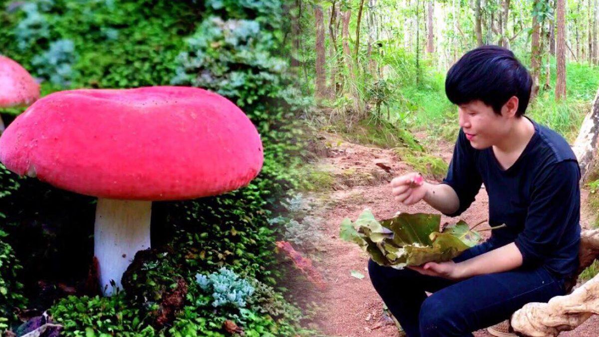 ใช้ชีวิตในป่ากับสราวุฒิ ตอน หาเห็ดป่า / Life in the Wild By Wut-Mushroom Hunting