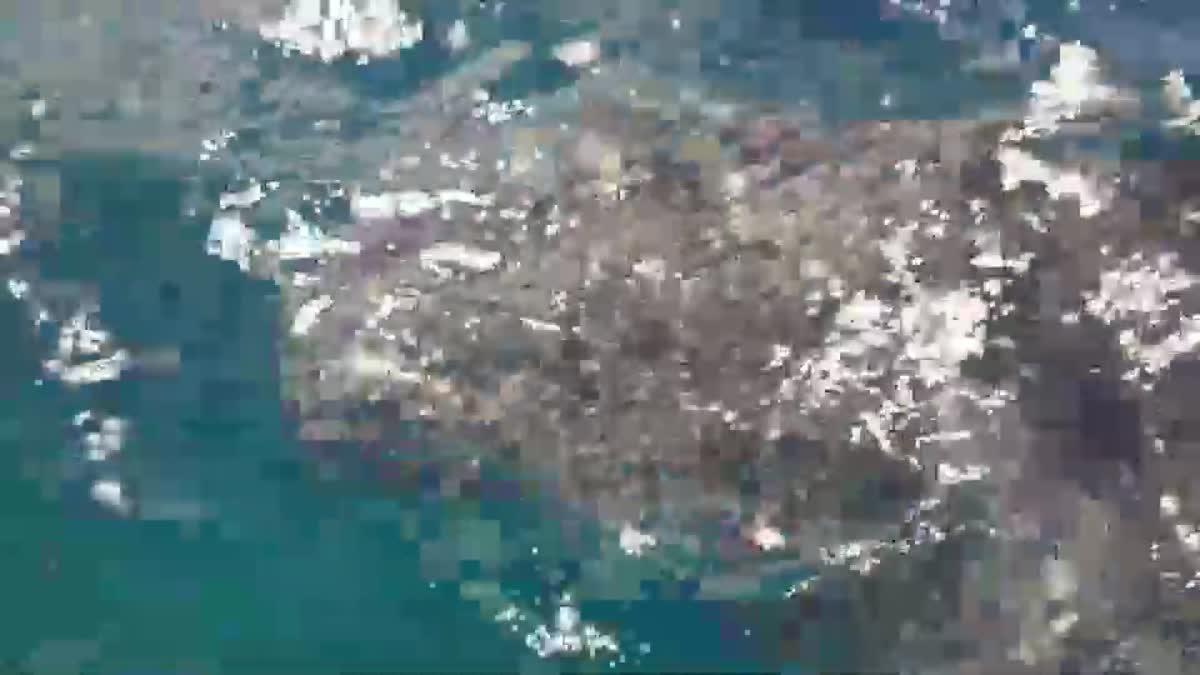 พบฉลามวาฬขนาดใหญ่ ว่ายน้ำหากินแพลงตอน บริเวณหมู่เกาะพีพี