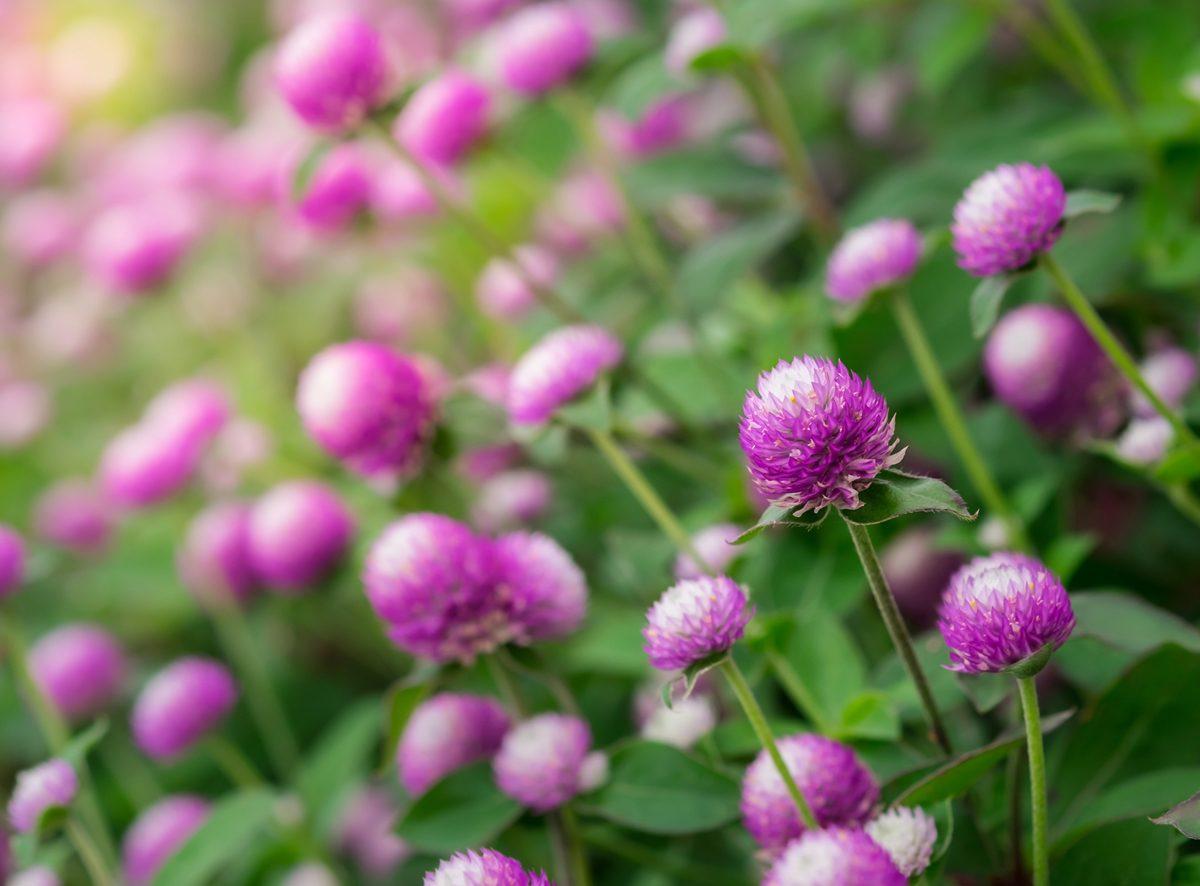 ความหมายของดอกไม้