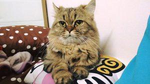 15 วิธีดูแล แมวเปอร์เซียPersian cat