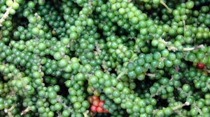 ชาวสวนผลไม้หัวใส! ปลูกพริกไทยบนต้นไม้ ไม่มีต้นทุนแถมเก็บขายได้ทุกวัน