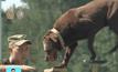 การแข่งขันสุนัขทหารในรัสเซีย