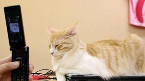 """เผยเหตุที่แมวชอบนั่งบนแล็ปท็อป จนได้ฉายา """"แมวพิมพ์"""""""
