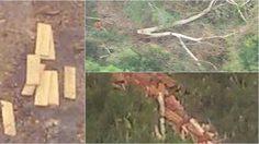 ผอ. ส่วนอนุรักษ์สัตว์ป่า พ้อหลังแจ้งเรื่องป่าถูกทำลาย แต่กลับจะถูกสั่งย้าย