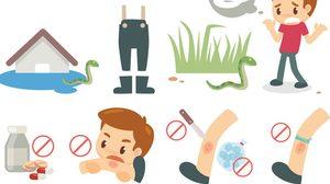 วิธีปฐมพยาบาลเบื้องต้น เวลาโดน งูกัด ห้ามใช้ปากดูดบาดแผล!!