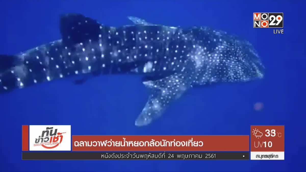 ฉลามวาฬว่ายน้ำหยอกล้อนักท่องเที่ยว