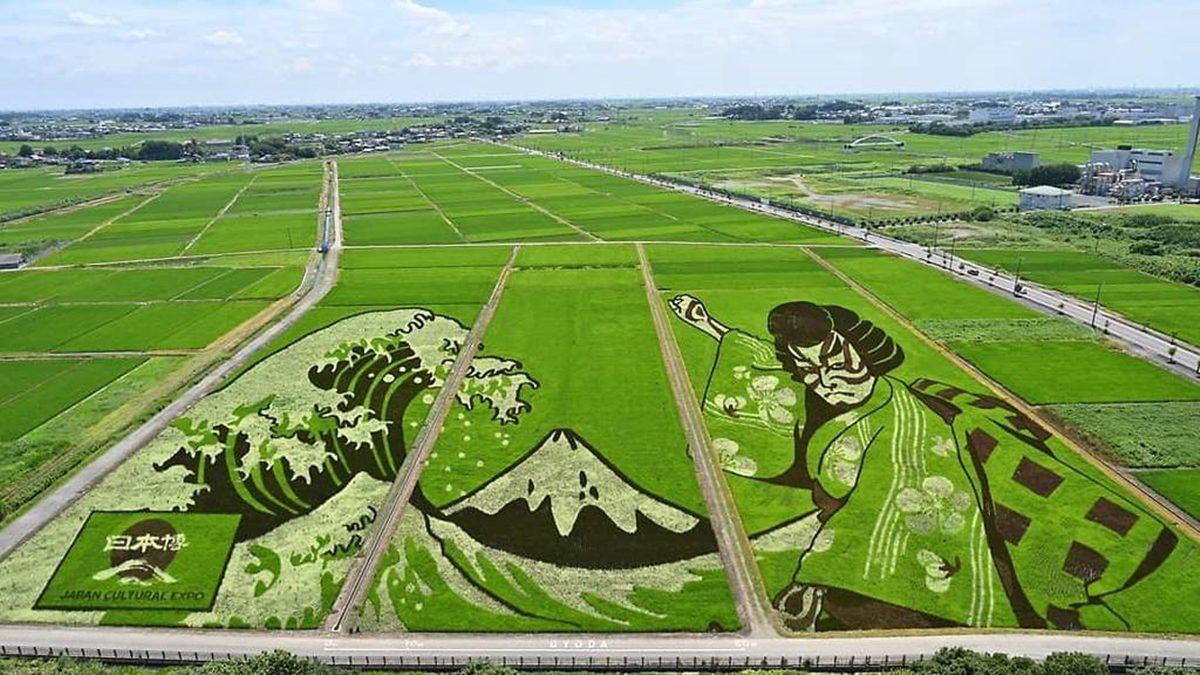 ญี่ปุ่น ตั้งใจปลูกข้าวให้เป็น ศิลปะบนทุ่งนา สำหรับ โอลิมปิก โตเกียวเกมส์ 2020