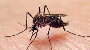 Dengue Key Facts and Por Tridsadee