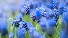 คุมโทนสวนสวยด้วย 20 ต้นไม้ดอกสีฟ้า สีหายากแต่งสวนแล้วปัง