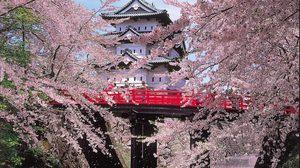 11 สถานที่ ชมวิวดอกซากุระ ที่สวยที่สุดในญี่ปุ่น