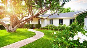 ต้นไม้ดอกหอม ปลูกในบ้านเพิ่มความสดชื่นให้บรรยากาศดูผ่อนคลาย
