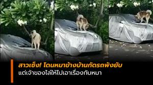สาวโพสต์คลิป โดนหมาข้างบ้านกัดรถพัง แต่เจ้าของไล่ไปเอาเรื่องกับหมา