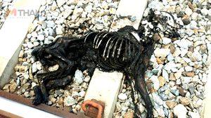 คลิปชัดมัดคนใจร้าย นาทีจับหมาจรจัด ไปเผาทั้งเป็น ที่ชลบุรี