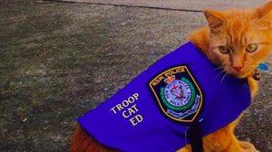 กระหน่ำไลค์ แมวตำรวจจอมขี้เกียจ ชอบหลับในหน้าที่ !!