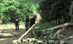 ช้างป่าทำลายสวนกล้วยชาวบ้านเสียหาย